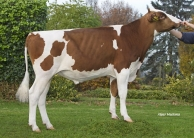 Appledrone (Huntje Holstein)